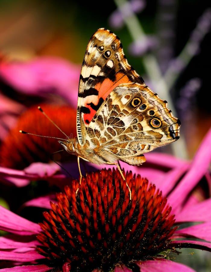 Gemalte Dame Butterfly lizenzfreie stockbilder