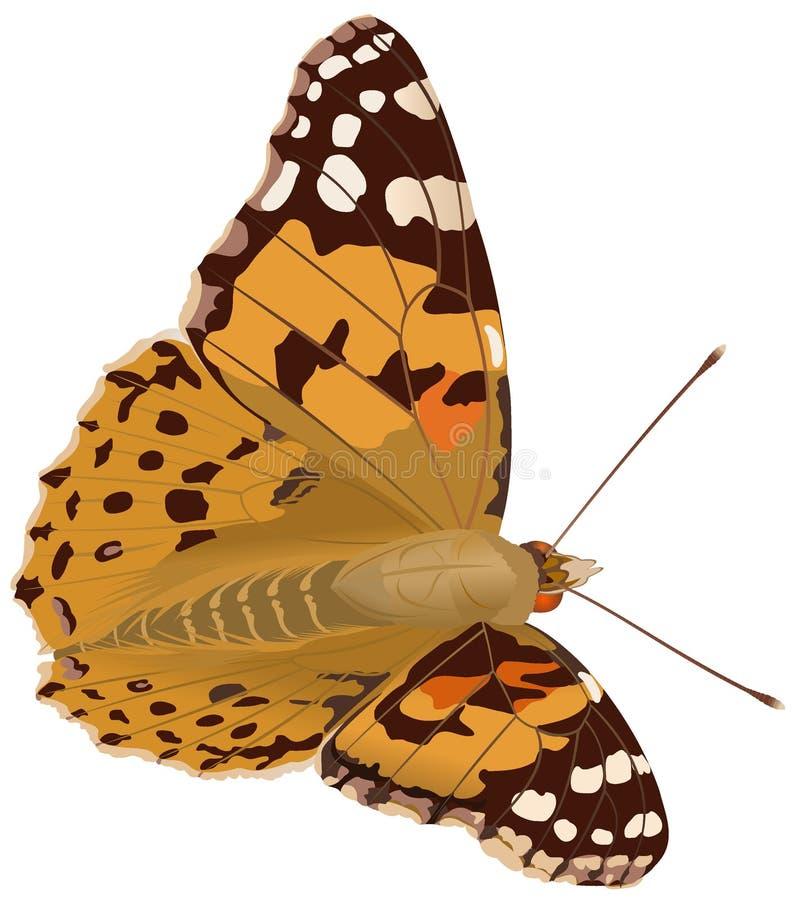 Gemalte Dame Butterfly stockfotos