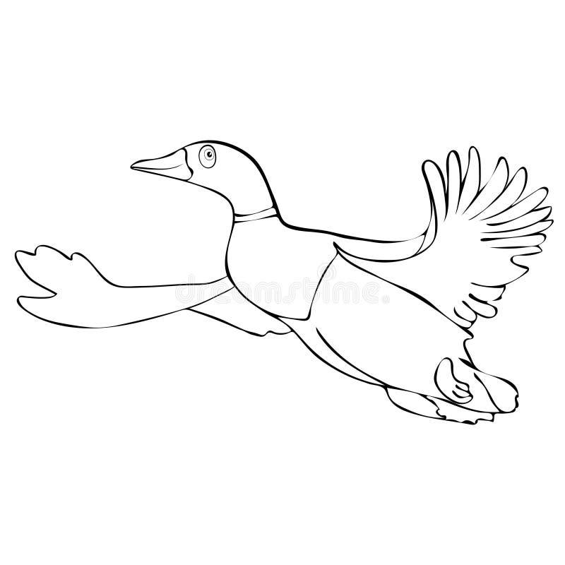 Gemalte nette lustige lineare Zeichnung des Vogelentenenterichs im Flug Hand, Zeichentrickfilm-Figur, Vektorschwarzweißabbildung, lizenzfreie abbildung