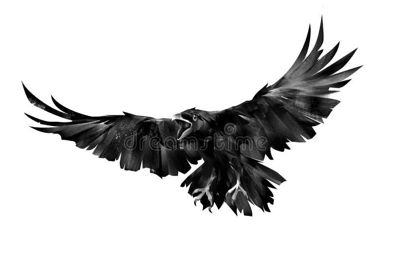 Gemalter Fliegenvogel eines Raben auf einem weißen Hintergrund stock abbildung