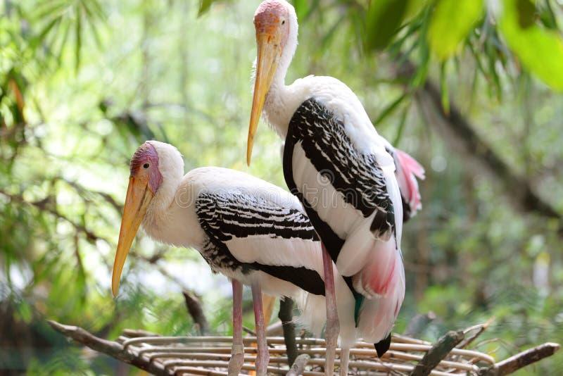 Gemalter Storch stockbilder