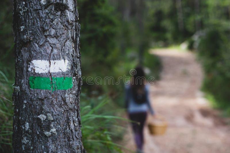 Gemaltes Wegkennzeichen auf einem Baum mit unscharfem Frauenwanderer auf Hintergrundpilzjäger stockfotografie