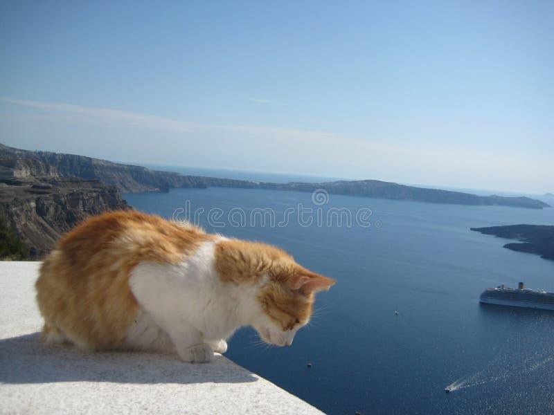 Gember en witte kat die van de toeristen in Santorini, Griekenland zien royalty-vrije stock fotografie