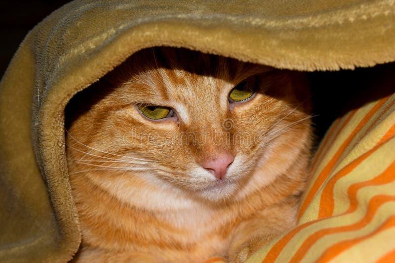Gemberkat onder deken wordt verborgen die De groene kat van de ogengember Puss in laarzen stock afbeelding