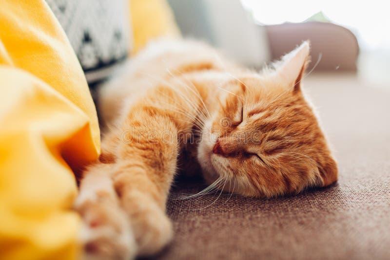 Gemberkat sleepng op laag in woonkamer met kussens wordt omringd dat royalty-vrije stock foto