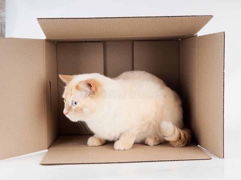 Gemberkater die in het document vakje, kartonvakje met een kat op witte achtergrond liggen stock fotografie