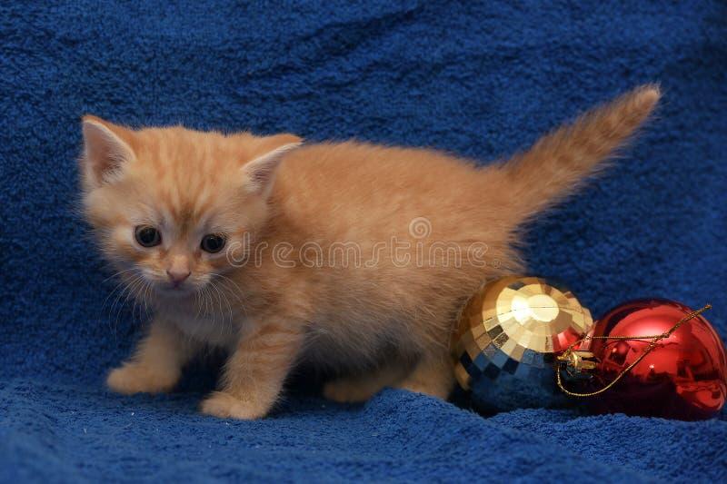 Gemberkatje en een Kerstmisbal stock foto