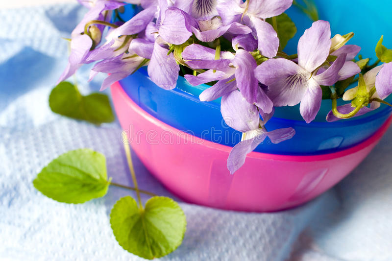 Gemeenschappelijk Hondviooltje - Altvioolriviniana - de lentebloem royalty-vrije stock fotografie