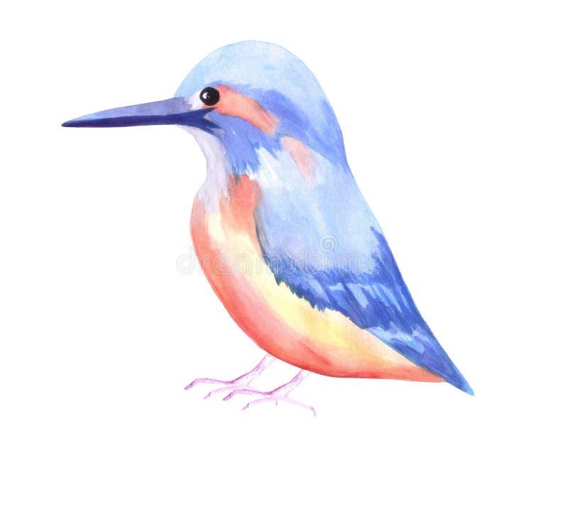 Gemeenschappelijke die Ijsvogel of Alcedinidae op wit wordt geïsoleerd stock illustratie