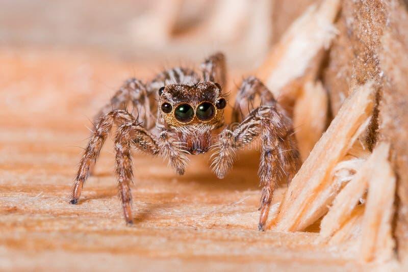 Gemeenschappelijke het Springen Spin stock afbeelding