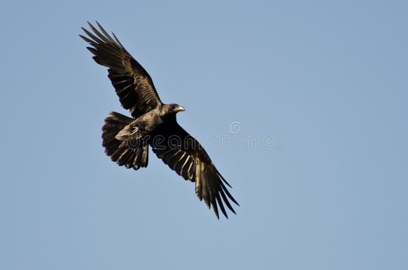 Gemeenschappelijke Raven Flying in Blauwe Hemel royalty-vrije stock foto's
