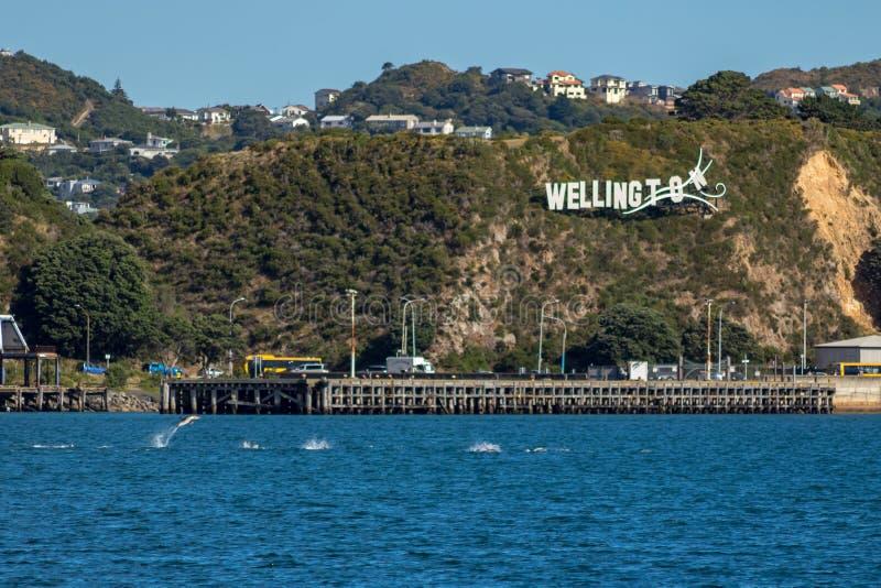 Gemeine Delphine springen in Evans Bay Infront Of Iconic Wellington City Sign stockbilder