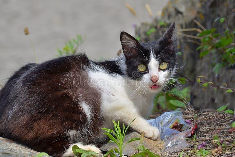 Gemeine Katze stockfotos