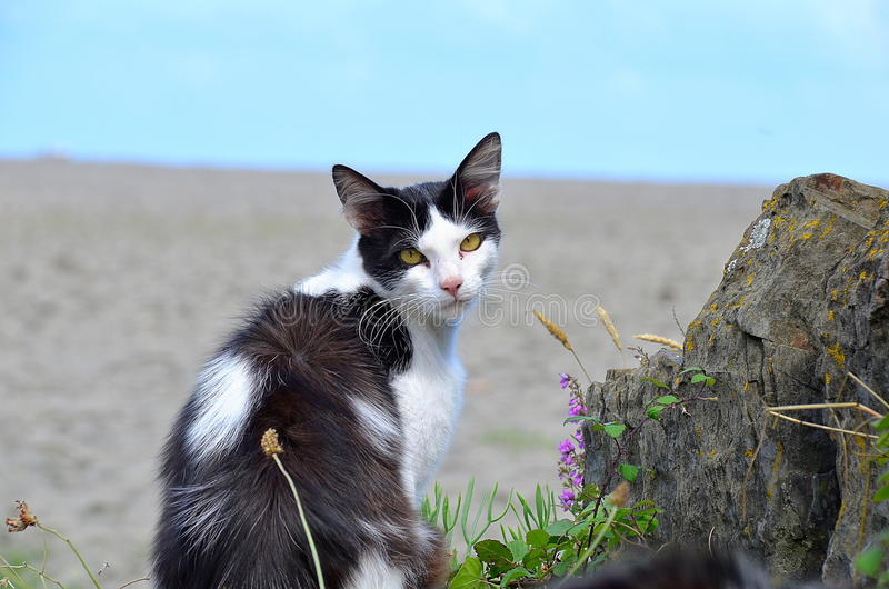 Gemeine Katze lizenzfreies stockfoto