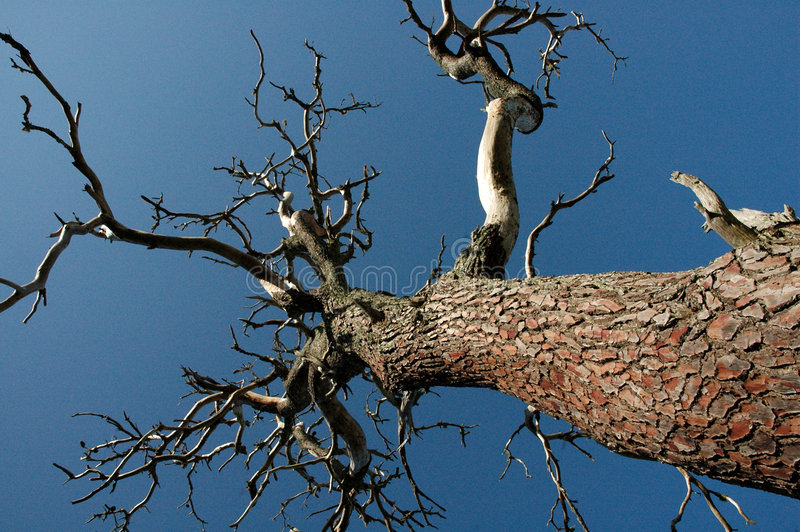Download Gemeiner Baum stockbild. Bild von himmel, verdreht, bauholz - 44167