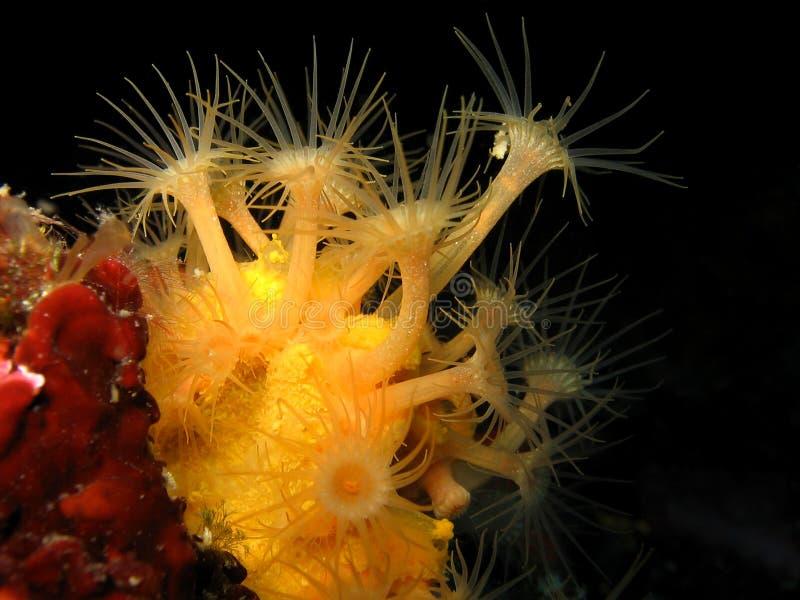 Gemeiner europäischer Hummer Unterwasser in einer Höhle lizenzfreie stockfotos