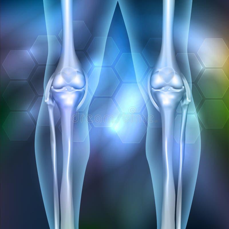 Gemeinsame Anatomie Des Beines Vektor Abbildung - Illustration von ...
