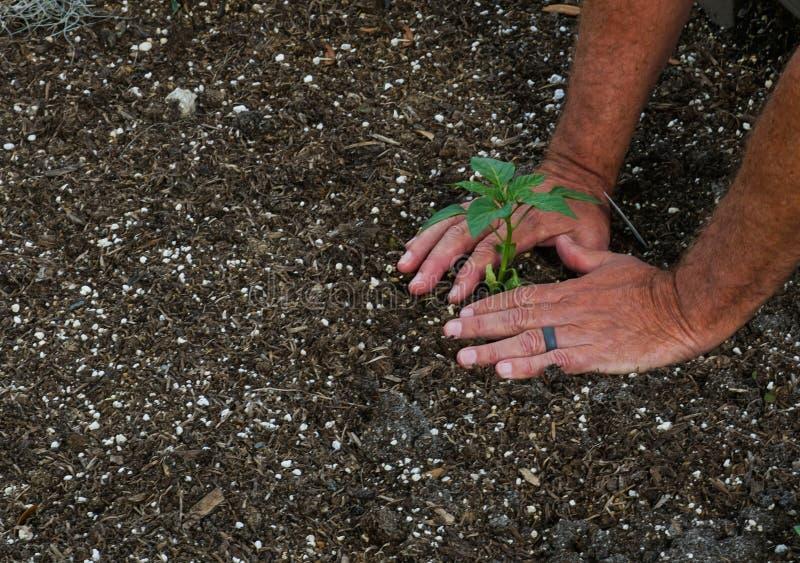 Gemeinschaftsgarten auf dem Pflanzen des Tages stockbild