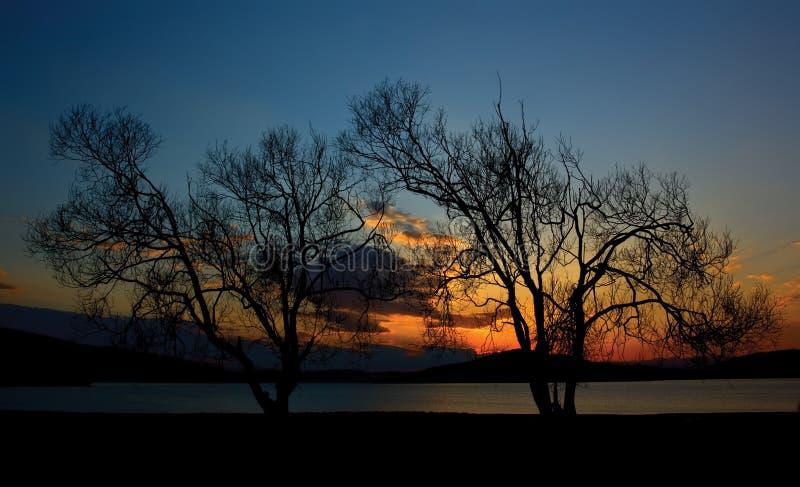Gemella l'albero nel tramonto fotografia stock libera da diritti