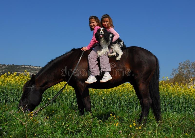 Gemelos y caballo imagen de archivo libre de regalías