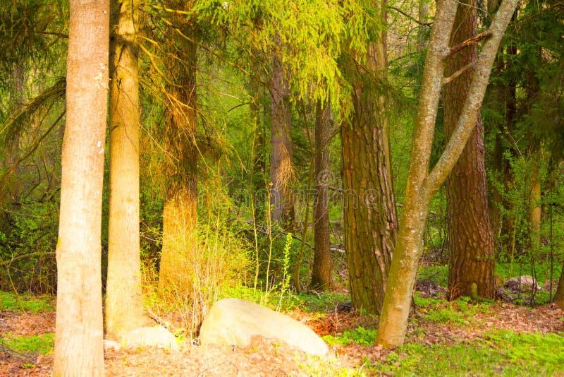 Gemengd bos in de vroege lente royalty-vrije stock foto's