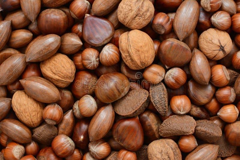 Gemengde noten - kastanjes, pecannoten, okkernoten, brazils en hazelnoten stock fotografie