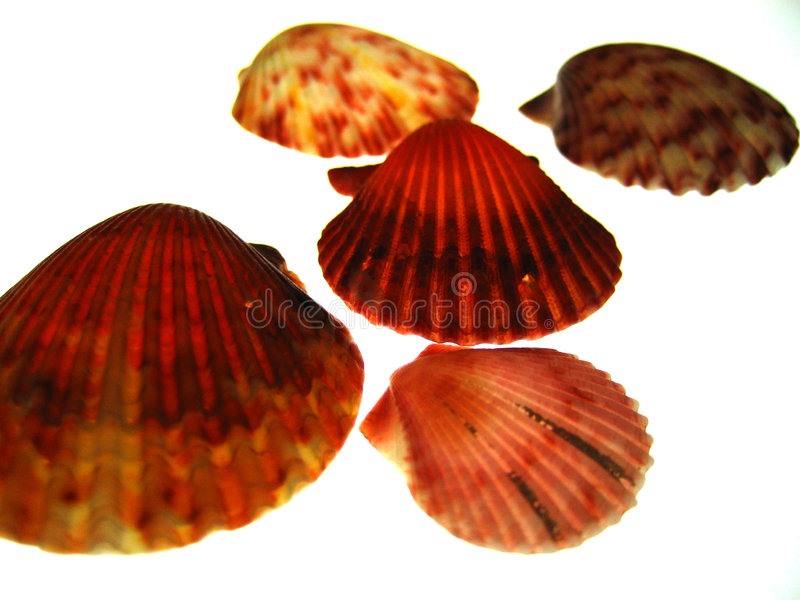 Gemengde Overzeese Shells royalty-vrije stock afbeelding