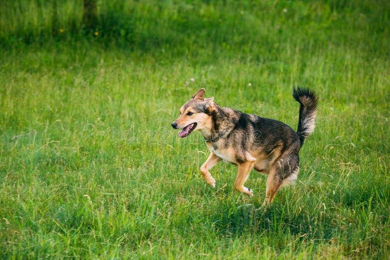 Gemengde Rassen Middelgrote Grootte Drie Legged Hondspel Openlucht in de Zomer royalty-vrije stock foto
