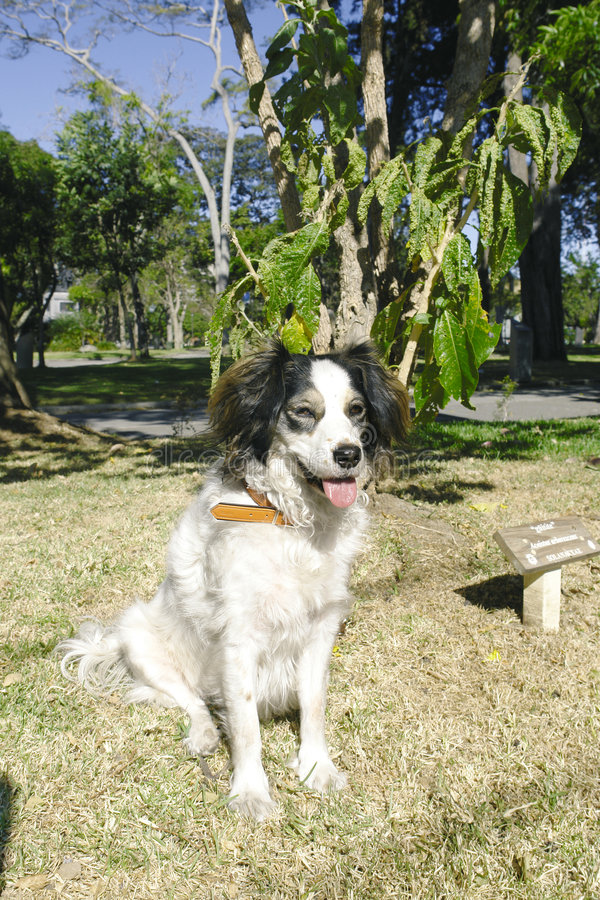 Gemengde rassenhond stock afbeelding