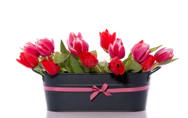 Gemengde rode roze tulpen royalty-vrije stock fotografie