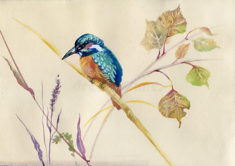 Gemensam kungsfiskarefågel stock illustrationer