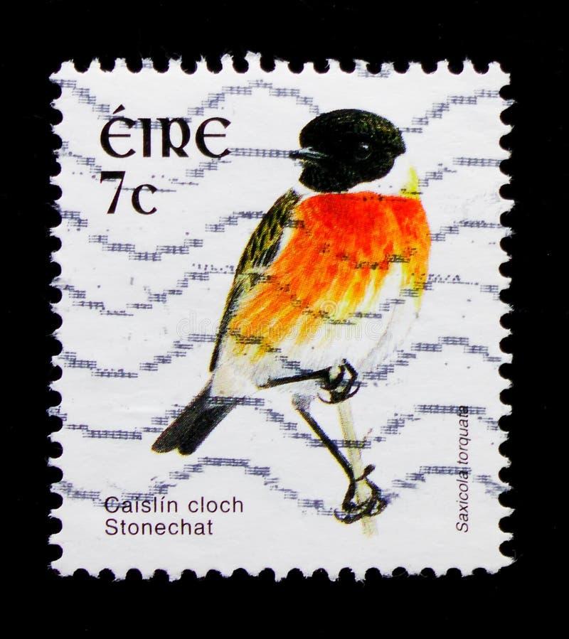 Gemensam Stonechat Saxicolatorquata, fågelDefinitives serie 2002-2004, circa 2003 royaltyfria bilder