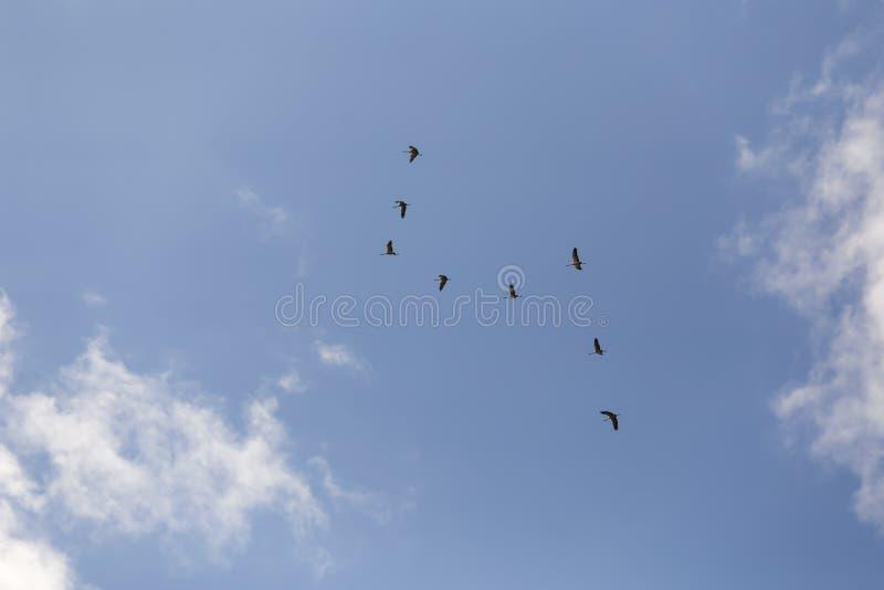 Gemensamma kranar i himlen arkivbild