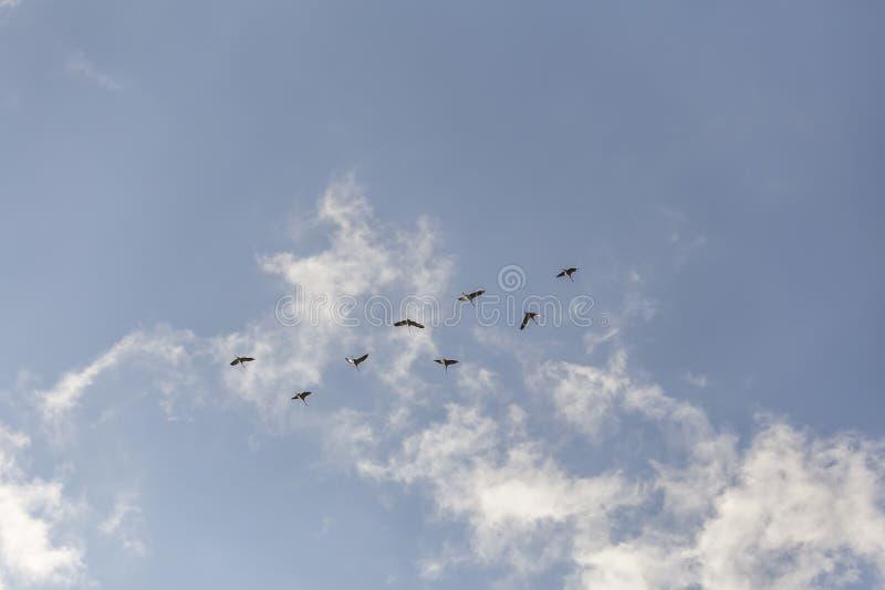 Gemensamma kranar i himlen royaltyfri fotografi