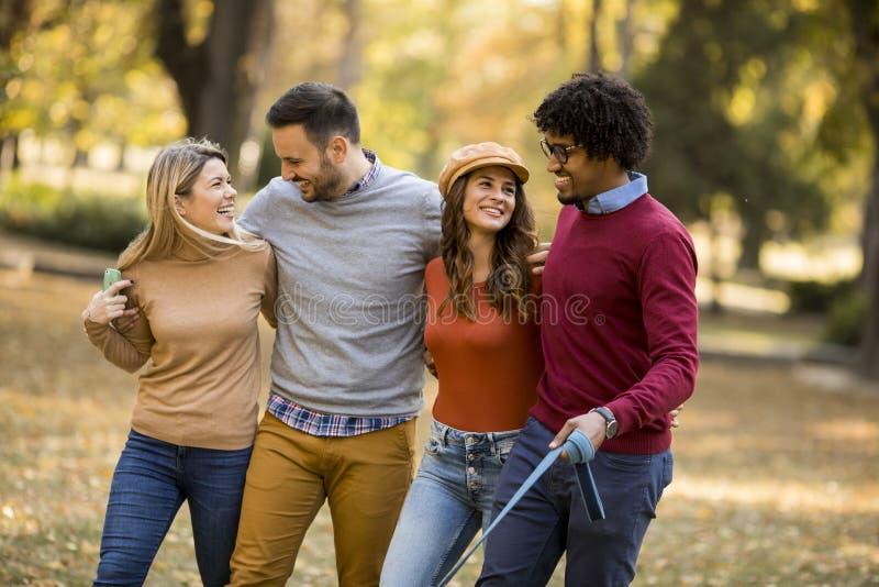 Gemischtrassige junge Leute, die in den Herbstpark gehen stockfotos