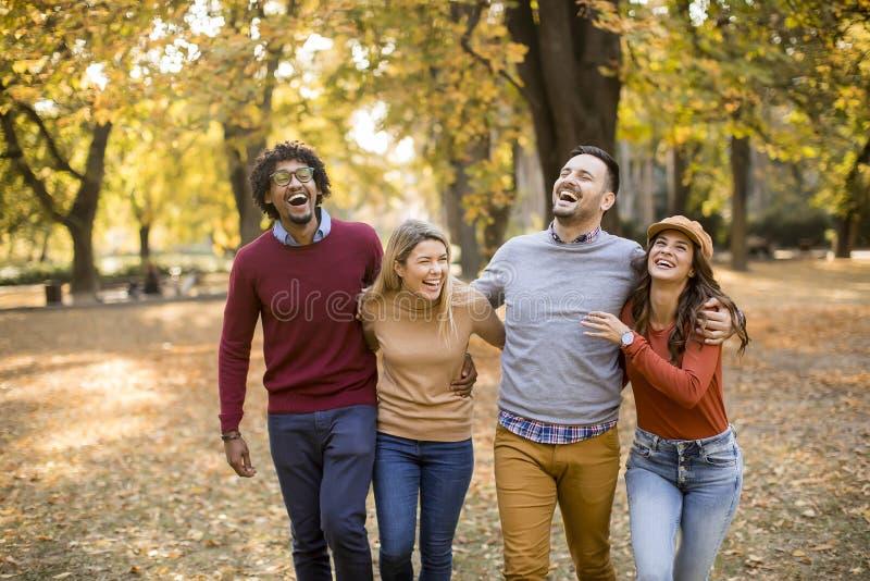 Gemischtrassige junge Leute, die in den Herbstpark gehen lizenzfreies stockfoto