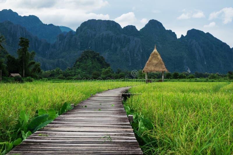 Gemodelleerd platteland, houten weg in groen padieveld in Vang Vieng, Laos stock afbeeldingen