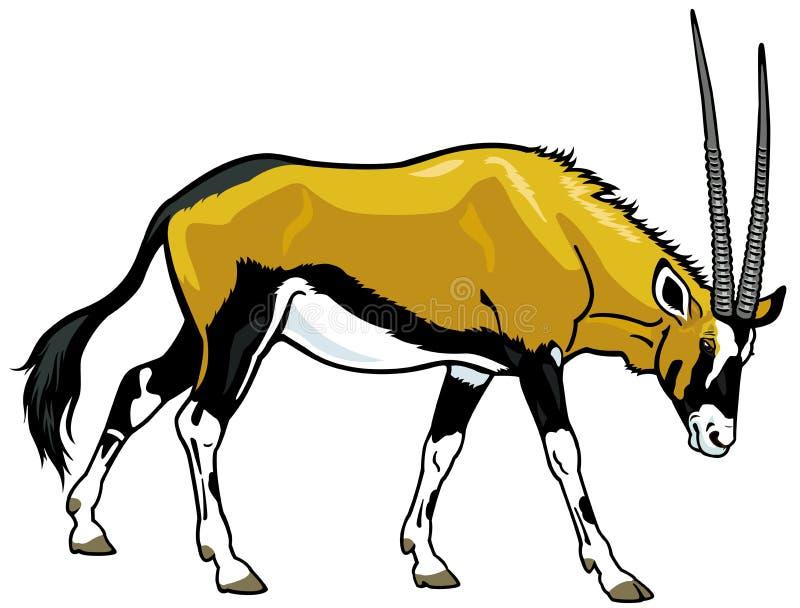 Gemsbok royaltyfri illustrationer