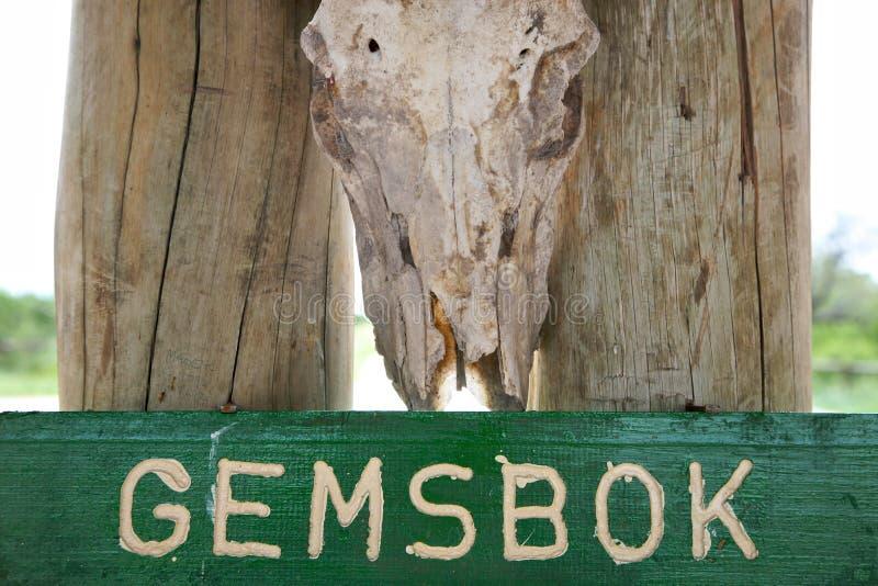 Gemsbok royalty-vrije stock fotografie