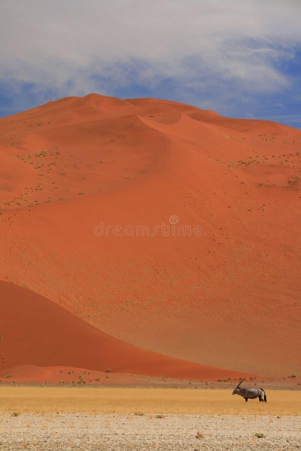 Gemsbok en el paisaje namabian del desierto fotografía de archivo libre de regalías