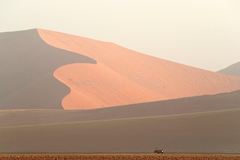 Gemsbok, gazella dell'orice, con la grande duna arancio con cielo blu e le nuvole, Sossusvlei, deserto di Namib, Namibia, Africa  immagini stock