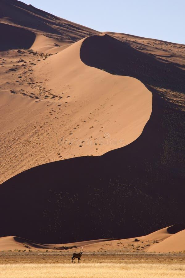 Download Gemsbok - Namib Desert - Sossusvlei - Namibia Royalty Free Stock Image - Image: 18763236