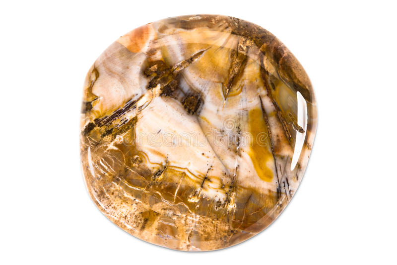 Gemstone på vit bakgrund, fossil- trä arkivbild