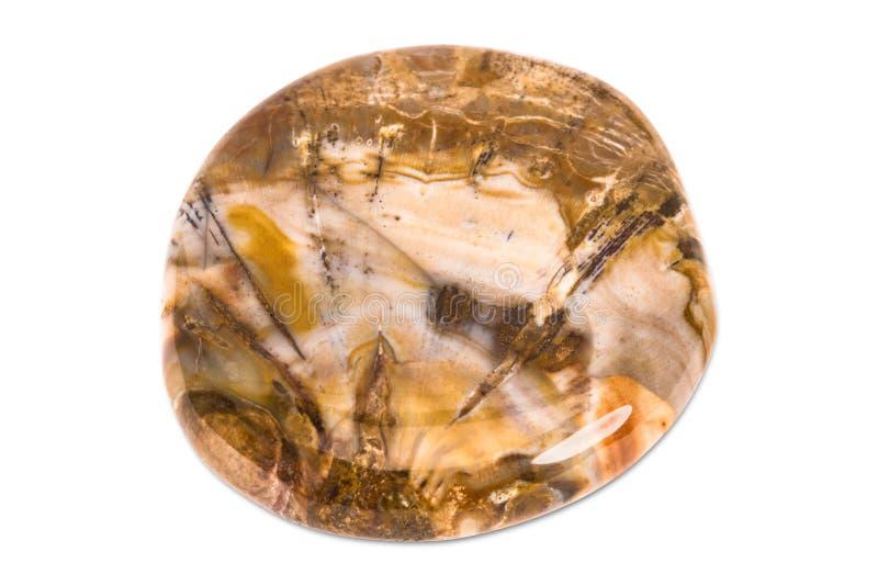 Gemstone on white background, fossil wood stock image