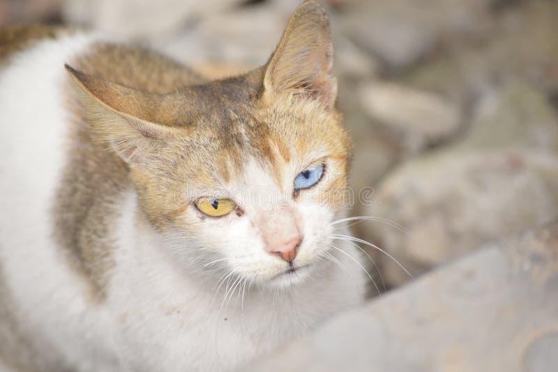 Gemusterte Katze lizenzfreies stockfoto