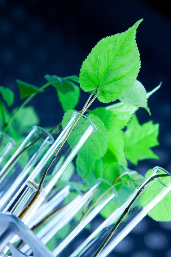 Genético modifique las plantas imagen de archivo libre de regalías