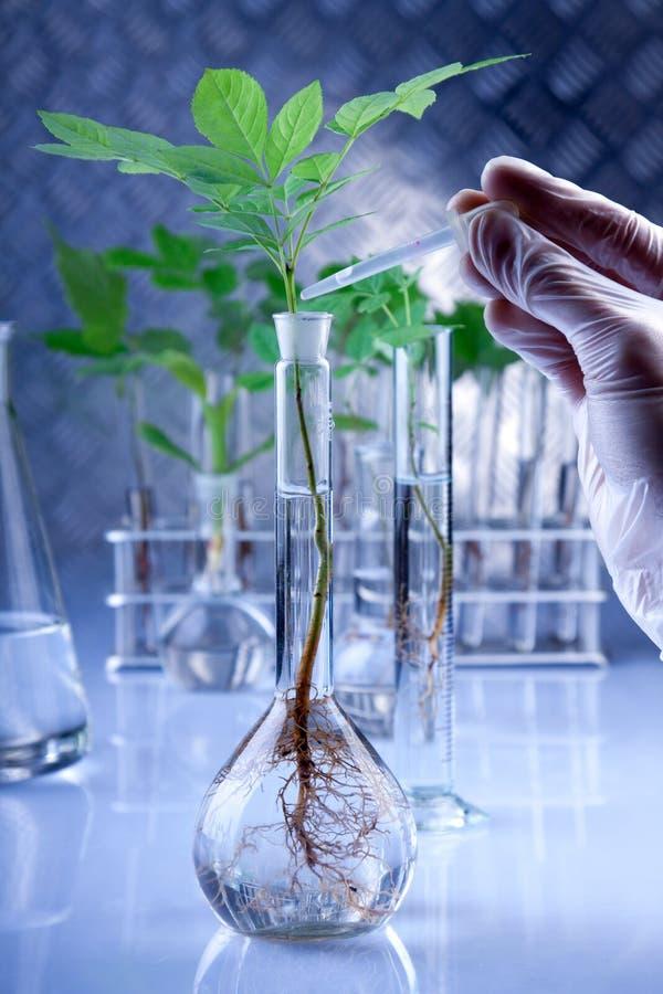 Genético modifique las plantas fotografía de archivo libre de regalías