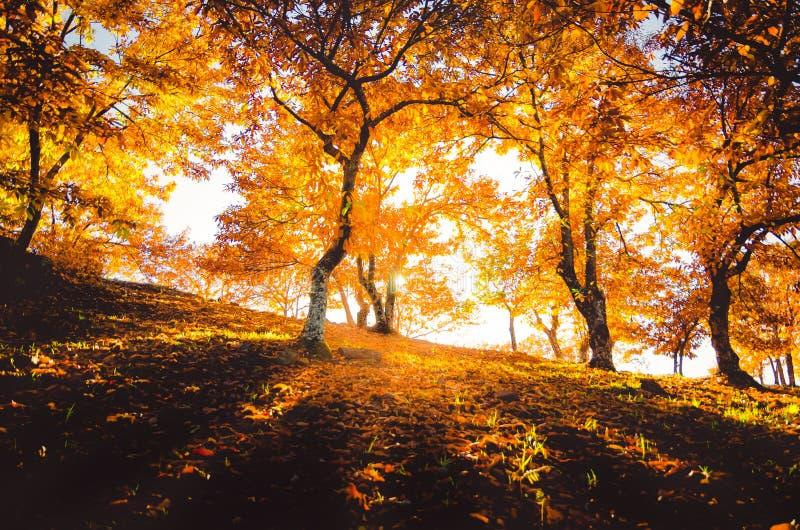 Genalvallei in de herfst, laga MÃ ¡ royalty-vrije stock afbeelding