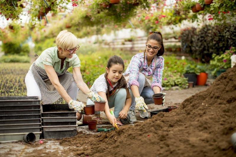 Genation tre av blomsterhandlare som tycker om arbete i växthuset arkivbilder