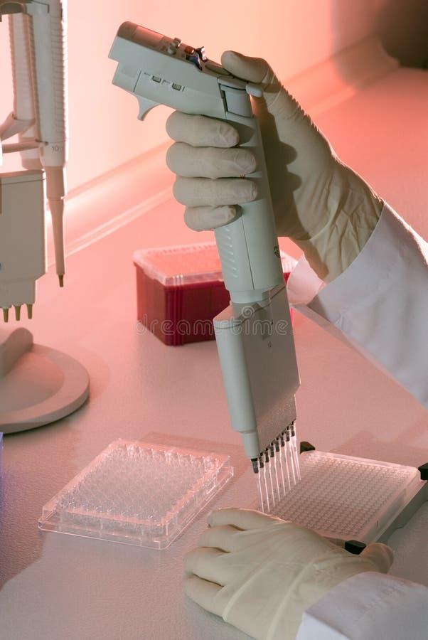 Gene laboratory royalty free stock photo